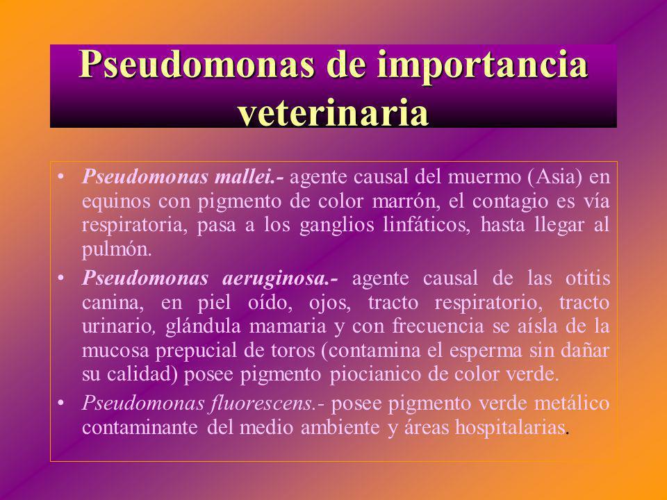 Pseudomonas de importancia veterinaria Pseudomonas mallei.- agente causal del muermo (Asia) en equinos con pigmento de color marrón, el contagio es ví