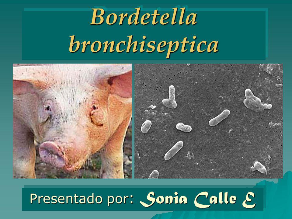 Bordetella bronchiseptica Presentado por : Sonia Calle E