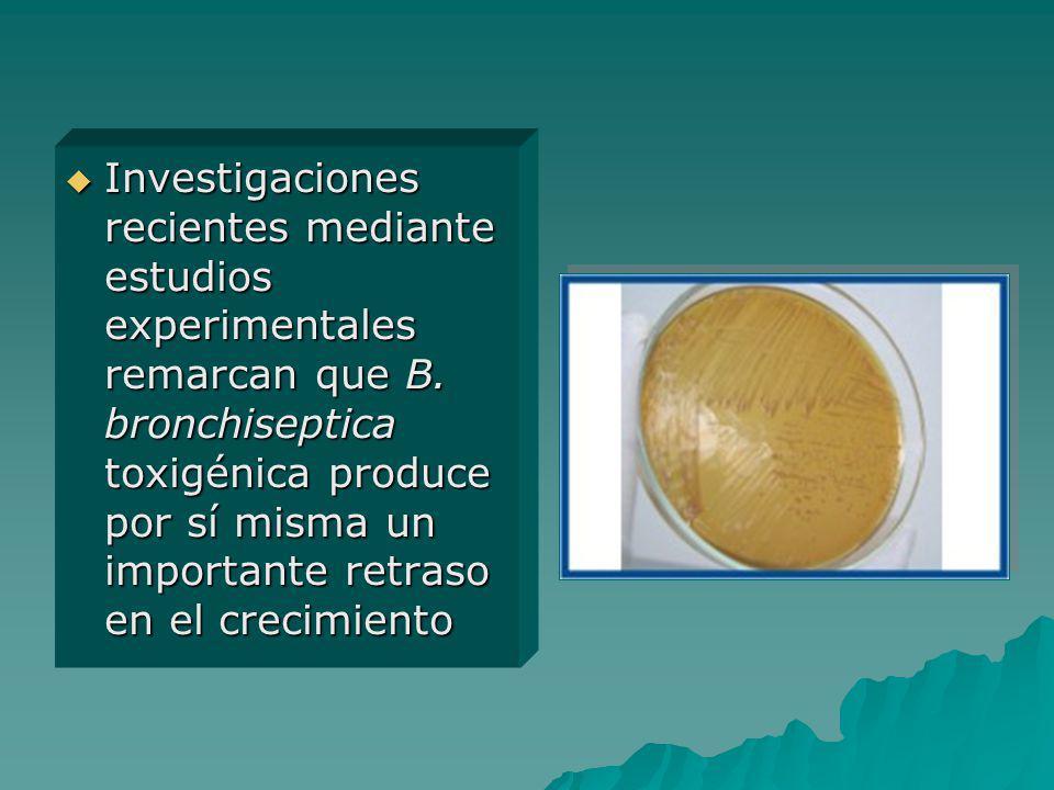 Investigaciones recientes mediante estudios experimentales remarcan que B. bronchiseptica toxigénica produce por sí misma un importante retraso en el