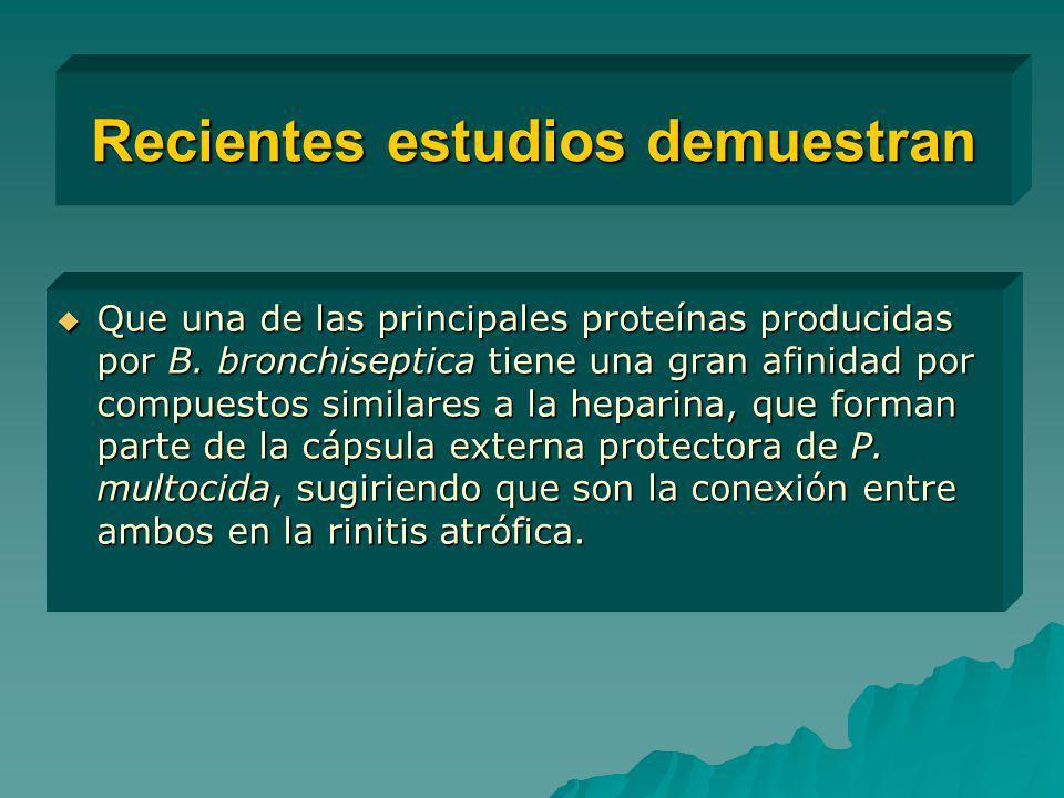 Recientes estudios demuestran Que una de las principales proteínas producidas por B. bronchiseptica tiene una gran afinidad por compuestos similares a