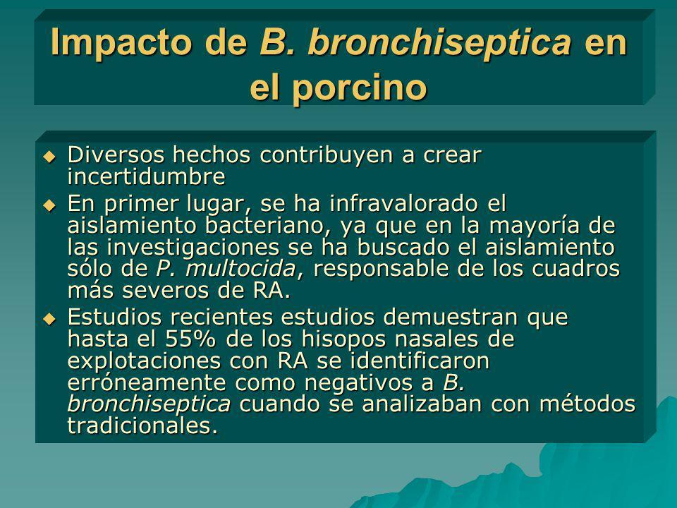 Impacto de B. bronchiseptica en el porcino Diversos hechos contribuyen a crear incertidumbre Diversos hechos contribuyen a crear incertidumbre En prim
