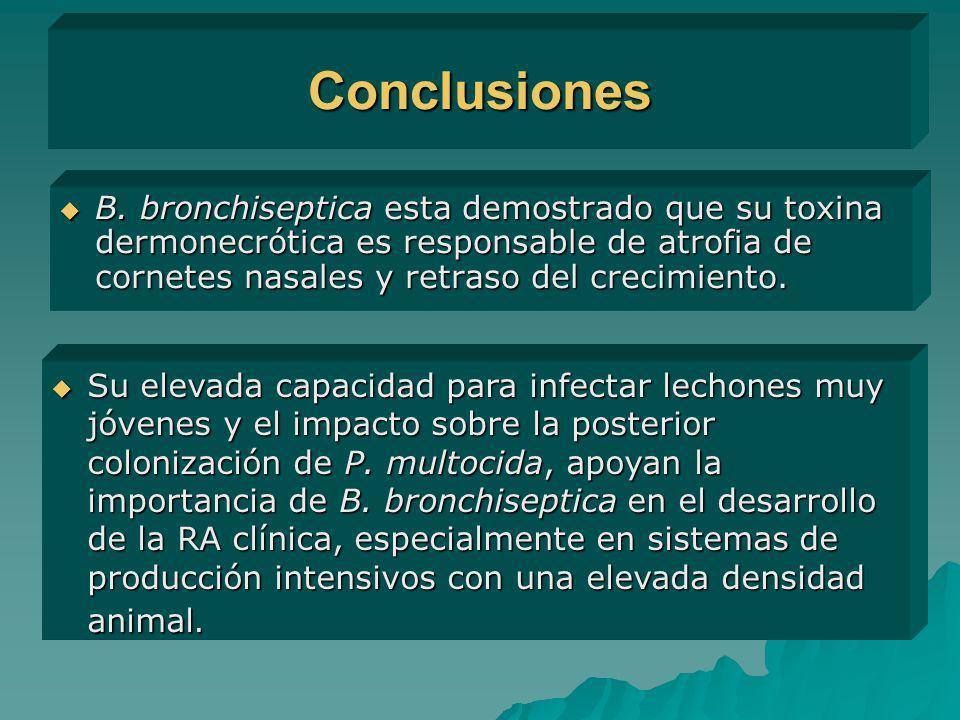 Conclusiones B. bronchiseptica esta demostrado que su toxina dermonecrótica es responsable de atrofia de cornetes nasales y retraso del crecimiento. B