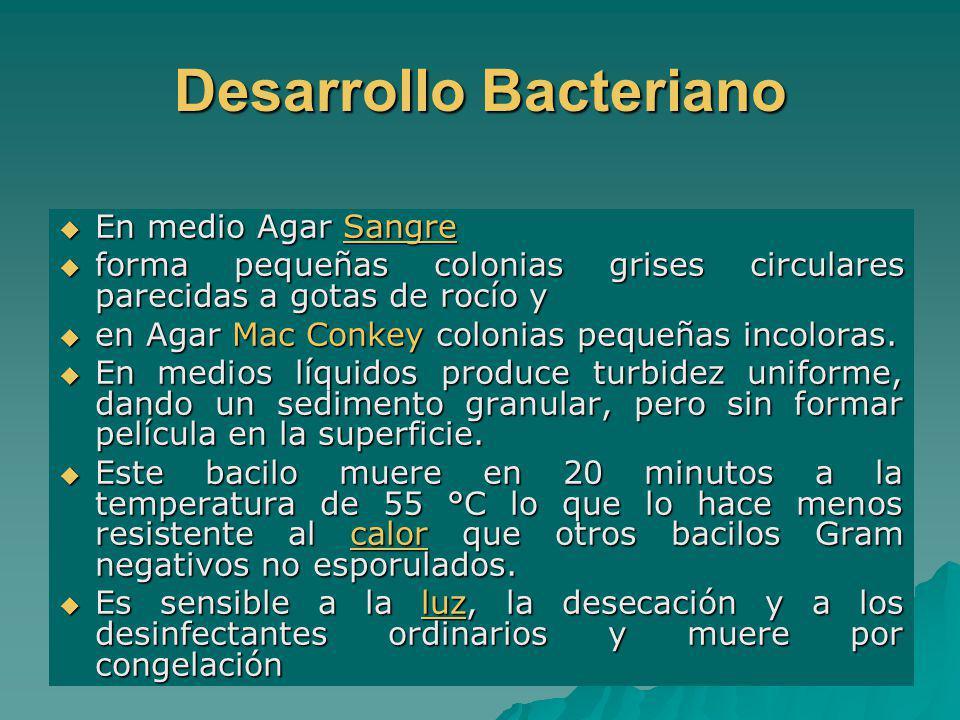 Desarrollo Bacteriano En medio Agar Sangre En medio Agar SangreSangre forma pequeñas colonias grises circulares parecidas a gotas de rocío y forma peq