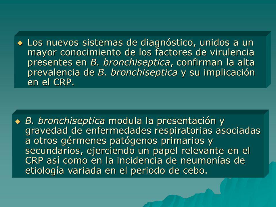 Los nuevos sistemas de diagnóstico, unidos a un mayor conocimiento de los factores de virulencia presentes en B. bronchiseptica, confirman la alta pre