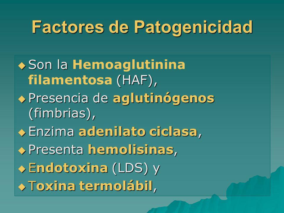 Factores de Patogenicidad Son la (HAF), Son la Hemoaglutinina filamentosa (HAF), Presencia de aglutinógenos (fimbrias), Presencia de aglutinógenos (fi