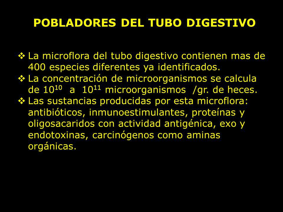 POBLADORES DEL TUBO DIGESTIVO La microflora del tubo digestivo contienen mas de 400 especies diferentes ya identificados. La concentración de microorg