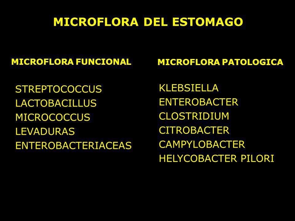 MICROFLORA DEL ESTOMAGO MICROFLORA FUNCIONAL MICROFLORA PATOLOGICA STREPTOCOCCUS LACTOBACILLUS MICROCOCCUS LEVADURAS ENTEROBACTERIACEAS KLEBSIELLA ENT