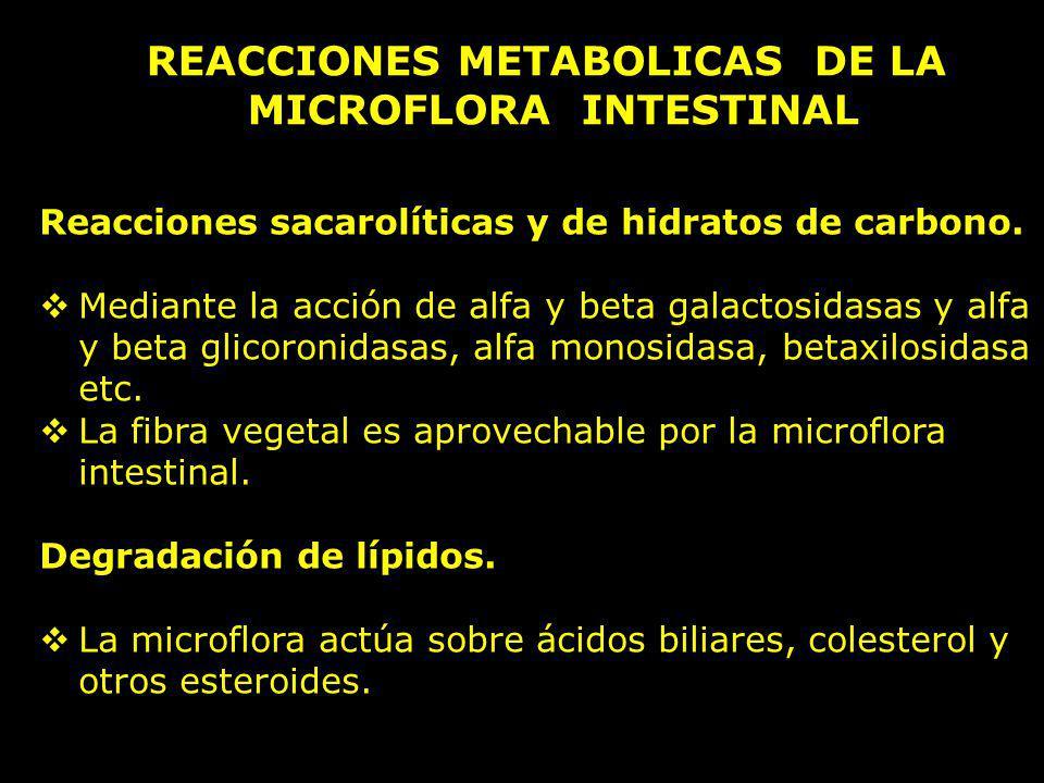 REACCIONES METABOLICAS DE LA MICROFLORA INTESTINAL Reacciones sacarolíticas y de hidratos de carbono. Mediante la acción de alfa y beta galactosidasas