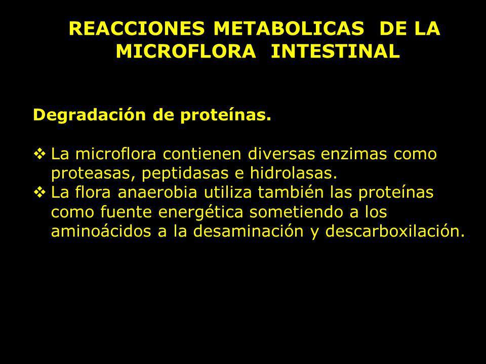 Degradación de proteínas. La microflora contienen diversas enzimas como proteasas, peptidasas e hidrolasas. La flora anaerobia utiliza también las pro