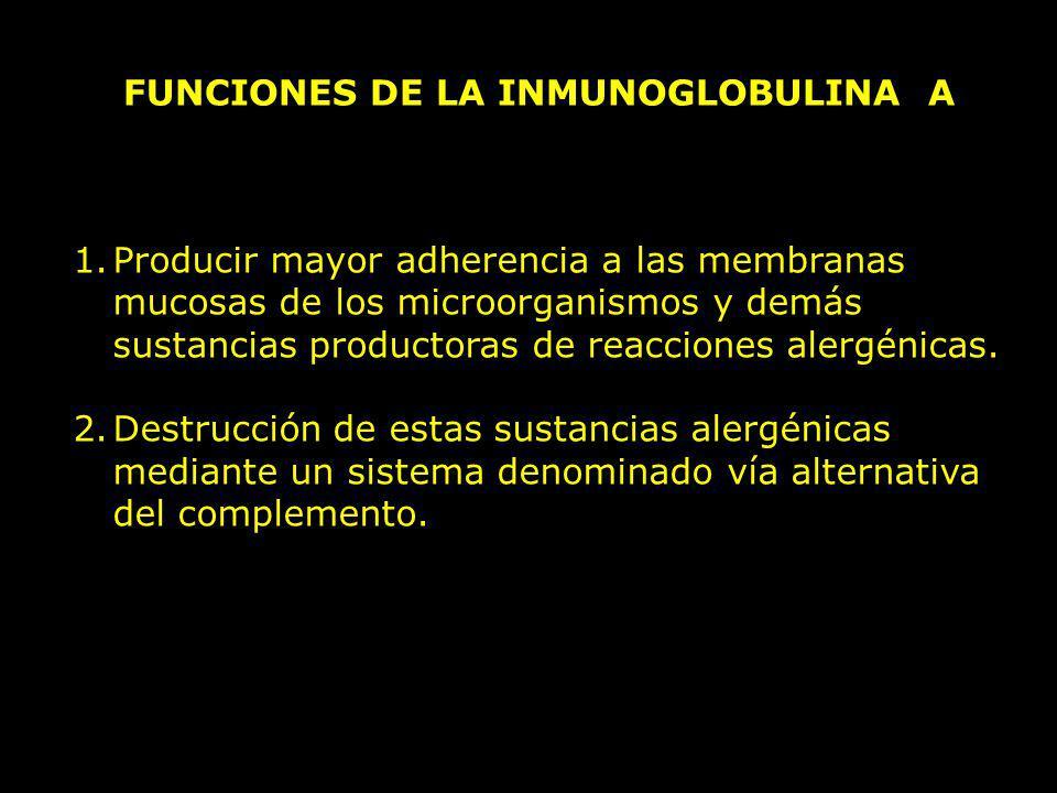 FUNCIONES DE LA INMUNOGLOBULINA A 1.Producir mayor adherencia a las membranas mucosas de los microorganismos y demás sustancias productoras de reaccio