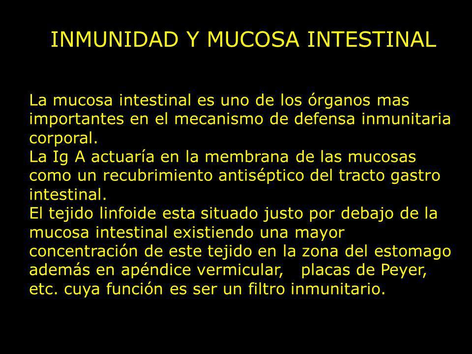 INMUNIDAD Y MUCOSA INTESTINAL La mucosa intestinal es uno de los órganos mas importantes en el mecanismo de defensa inmunitaria corporal. La Ig A actu