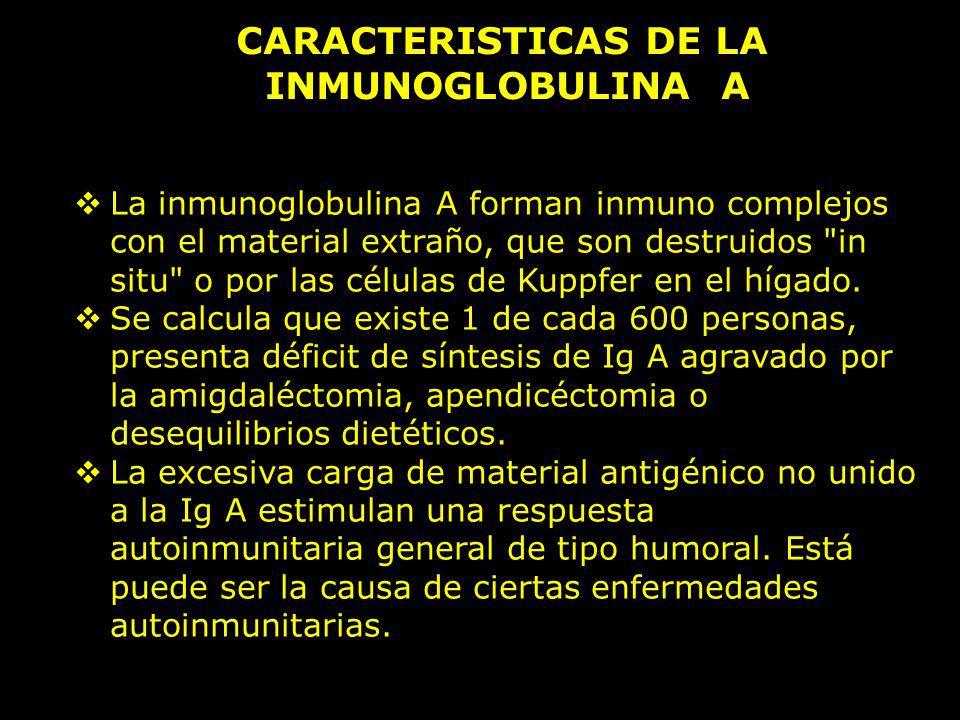 CARACTERISTICAS DE LA INMUNOGLOBULINA A La inmunoglobulina A forman inmuno complejos con el material extraño, que son destruidos