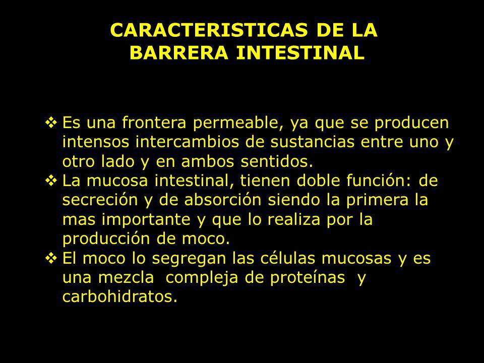 CARACTERISTICAS DE LA BARRERA INTESTINAL Es una frontera permeable, ya que se producen intensos intercambios de sustancias entre uno y otro lado y en