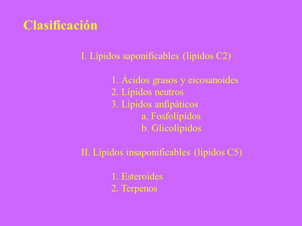 Clasificación I. Lípidos saponificables (lípidos C2) 1. Ácidos grasos y eicosanoides 2. Lípidos neutros 3. Lípidos anfipáticos a. Fosfolípidos b. Glic