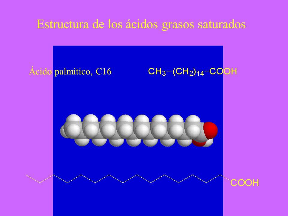 Estructura de los ácidos grasos saturados Ácido palmítico, C16