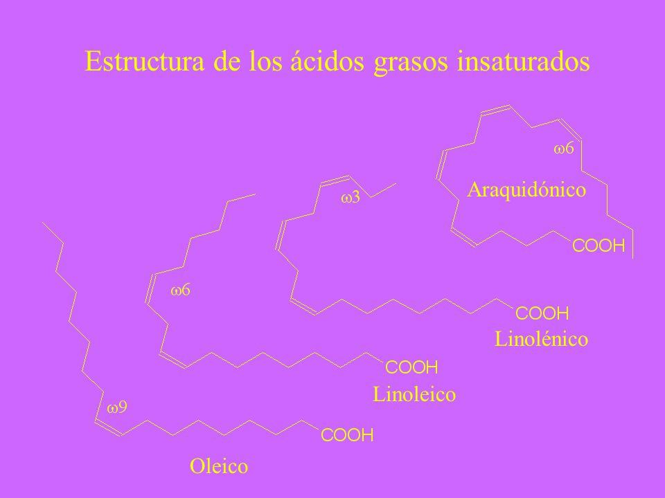 Estructura de los ácidos grasos insaturados Oleico Linoleico Linolénico Araquidónico