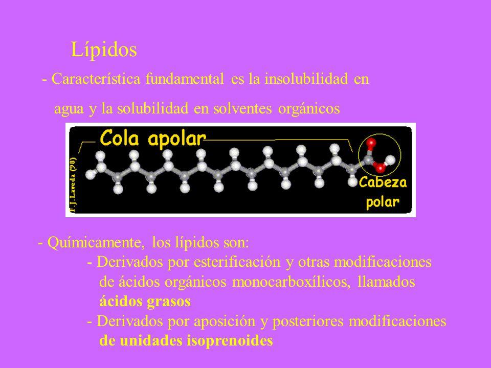 - Químicamente, los lípidos son: - Derivados por esterificación y otras modificaciones de ácidos orgánicos monocarboxílicos, llamados ácidos grasos -