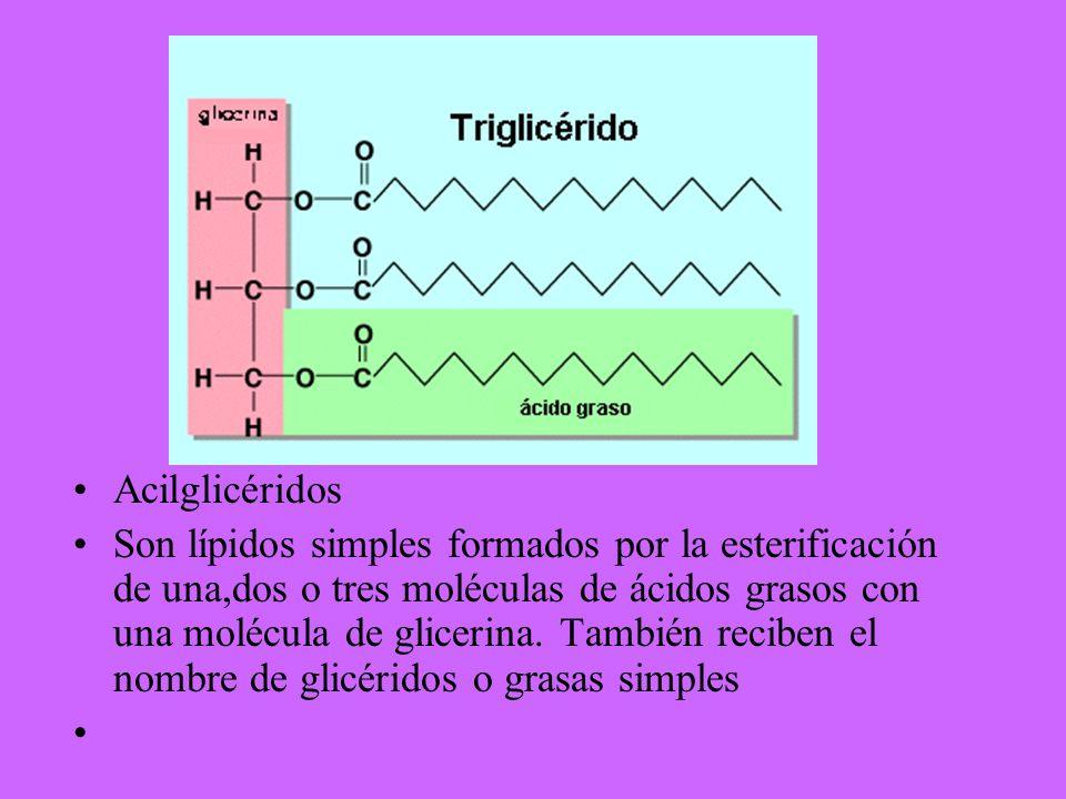 Acilglicéridos Son lípidos simples formados por la esterificación de una,dos o tres moléculas de ácidos grasos con una molécula de glicerina. También