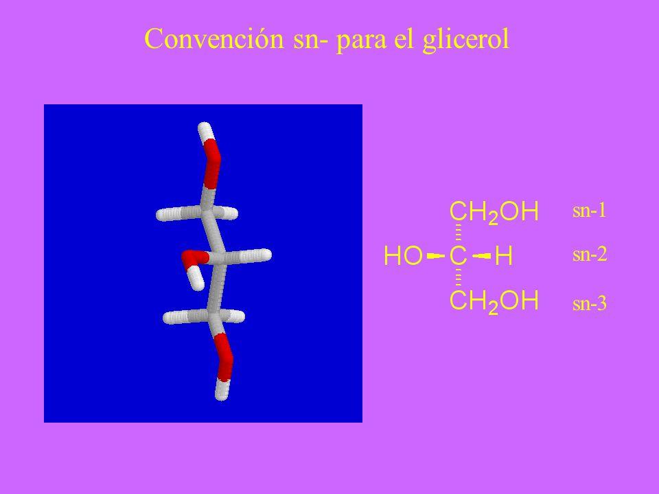 sn-1 sn-2 sn-3 Convención sn- para el glicerol