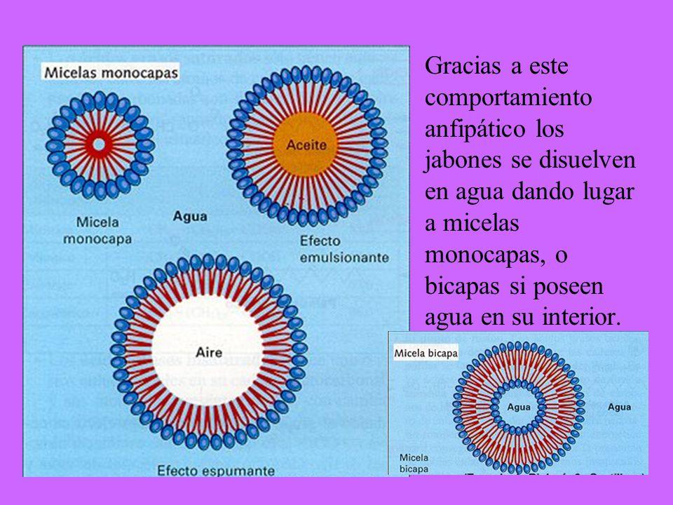 11-cis retinal Opsina Rodopsina (11-cis) Rodopsina* todo-trans retinal Opsina h (cuanto de luz) Retinal isomerasa El ciclo visual, 1 Impulso nervioso