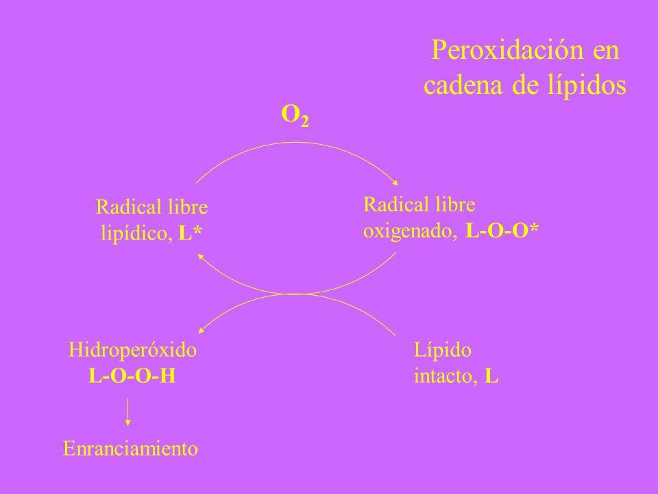 Radical libre lipídico, L* Radical libre oxigenado, L-O-O* O2O2 Lípido intacto, L Hidroperóxido L-O-O-H Enranciamiento Peroxidación en cadena de lípid