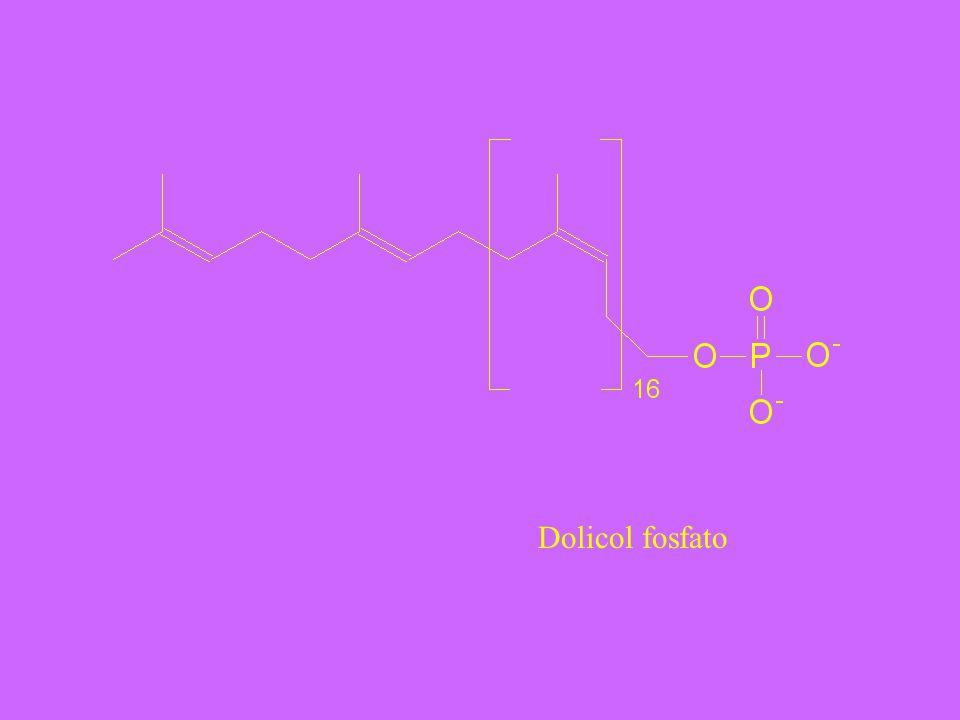 Dolicol fosfato