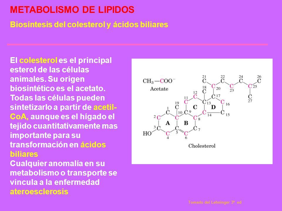 METABOLISMO DE LIPIDOS Biosíntesis del colesterol y ácidos biliares El colesterol es el principal esterol de las células animales. Su origen biosintét