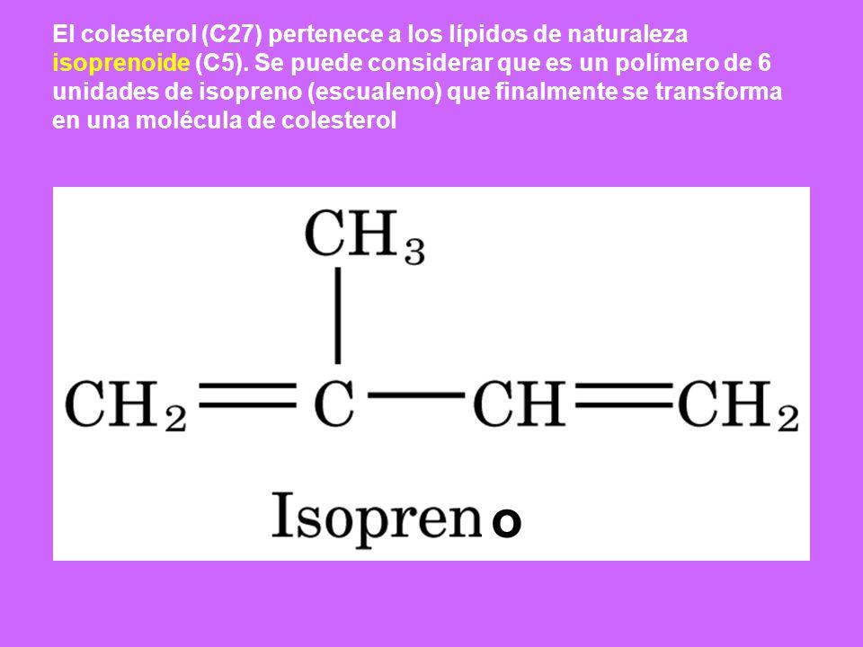 El colesterol (C27) pertenece a los lípidos de naturaleza isoprenoide (C5). Se puede considerar que es un polímero de 6 unidades de isopreno (escualen