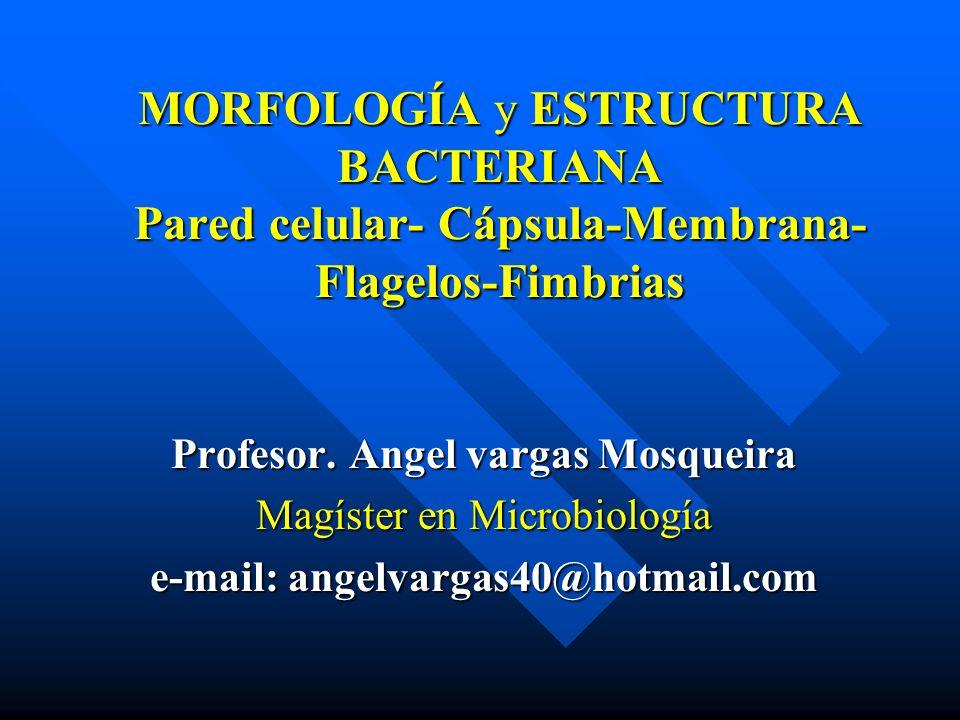 MORFOLOGÍA y ESTRUCTURA BACTERIANA Pared celular- Cápsula-Membrana- Flagelos-Fimbrias Profesor. Angel vargas Mosqueira Magíster en Microbiología e-mai