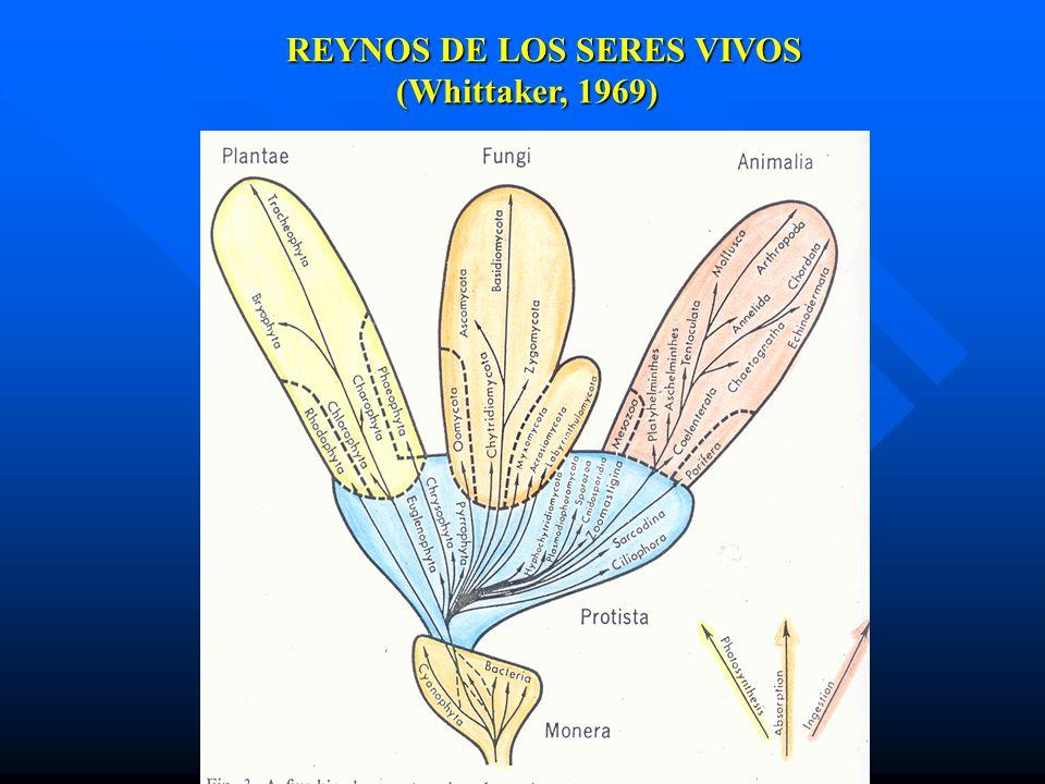 REYNOSDE LOS SERES VIVOS REYNOS DE LOS SERES VIVOS (Whittaker, 1969)