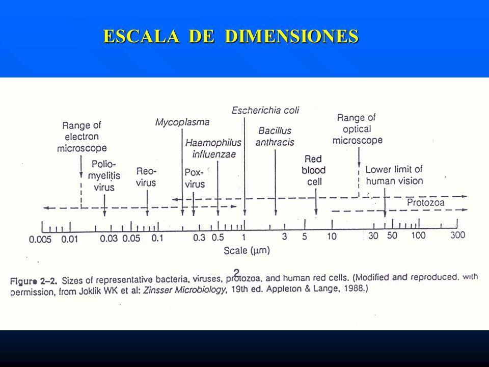 ESCALA DE DIMENSIONES