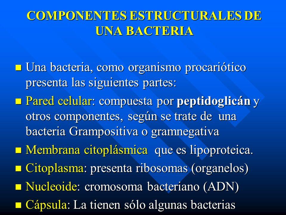 COMPONENTES ESTRUCTURALES DE UNA BACTERIA Una bacteria, como organismo procariótico presenta las siguientes partes: Una bacteria, como organismo procariótico presenta las siguientes partes: Pared celular: compuesta por peptidoglicán y otros componentes, según se trate de una bacteria Grampositiva o gramnegativa Pared celular: compuesta por peptidoglicán y otros componentes, según se trate de una bacteria Grampositiva o gramnegativa Membrana citoplásmica que es lipoproteica.