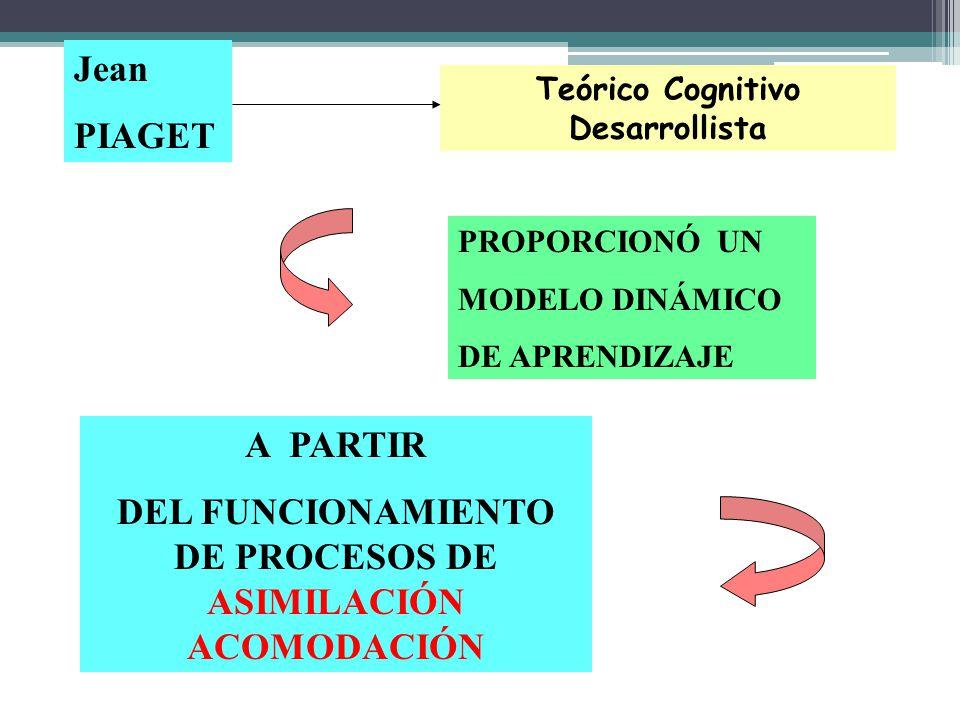 Jean PIAGET PROPORCIONÓ UN MODELO DINÁMICO DE APRENDIZAJE A PARTIR DEL FUNCIONAMIENTO DE PROCESOS DE ASIMILACIÓN ACOMODACIÓN Teórico Cognitivo Desarro