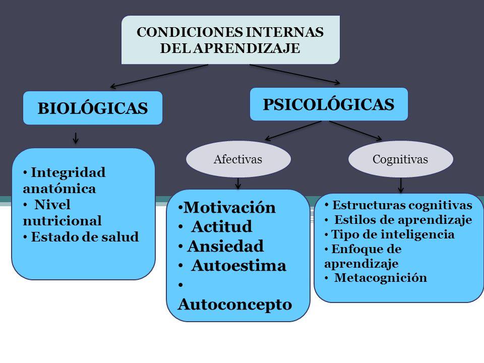 CONDICIONES INTERNAS DEL APRENDIZAJE BIOLÓGICAS PSICOLÓGICAS AfectivasCognitivas Motivación Actitud Ansiedad Autoestima Autoconcepto Estructuras cogni