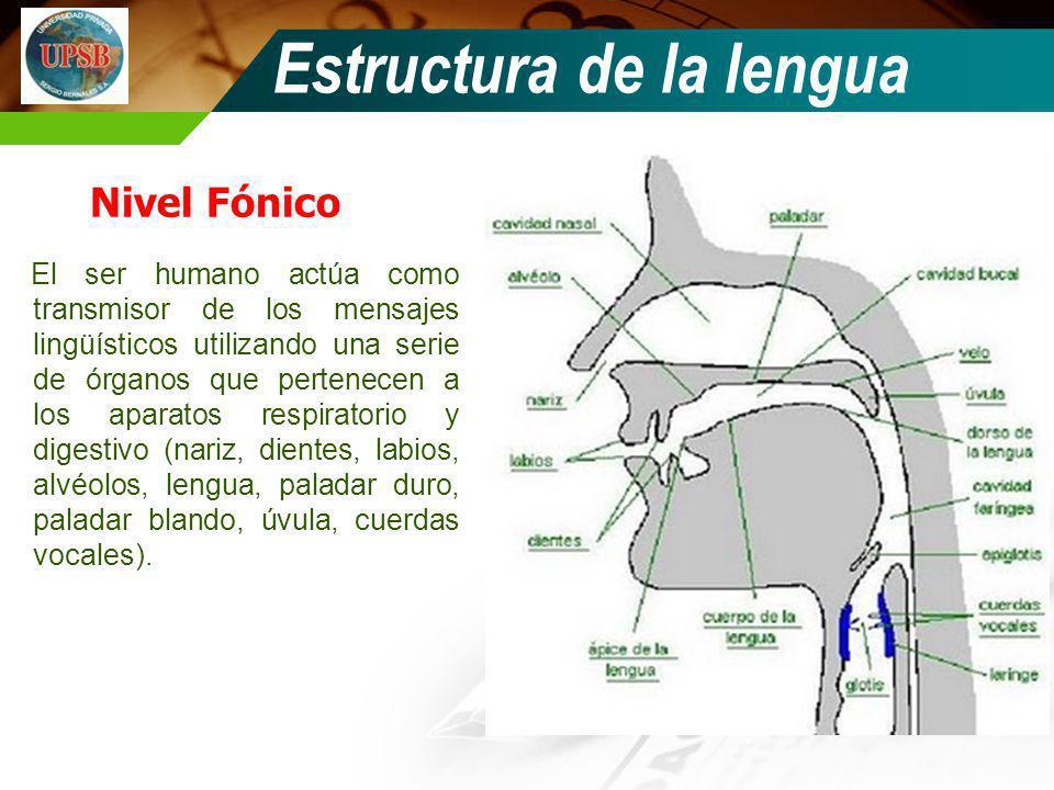 Nivel Fónico El ser humano actúa como transmisor de los mensajes lingüísticos utilizando una serie de órganos que pertenecen a los aparatos respirator