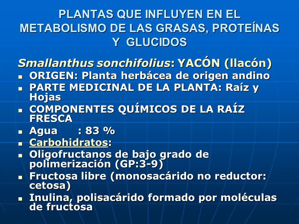 Smallanthus sonchifolius: YACÓN (llacón) ORIGEN: Planta herbácea de origen andino ORIGEN: Planta herbácea de origen andino PARTE MEDICINAL DE LA PLANT