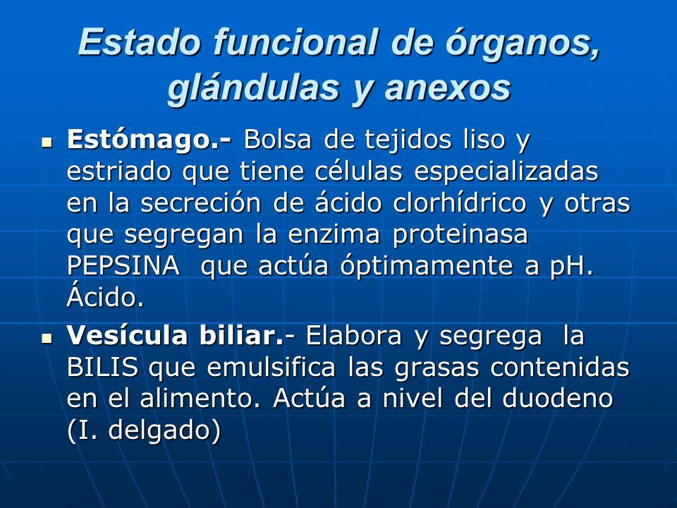 Estado funcional de órganos, glándulas y anexos Páncreas.- Elabora y segrega el jugo pancreático (mezcla de bicarbonato y enzimas amilasas y TRIPSINA (proteinasa).
