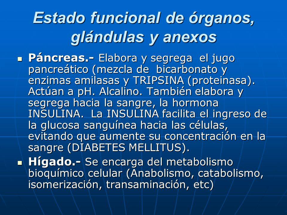 Estado funcional de órganos, glándulas y anexos Páncreas.- Elabora y segrega el jugo pancreático (mezcla de bicarbonato y enzimas amilasas y TRIPSINA