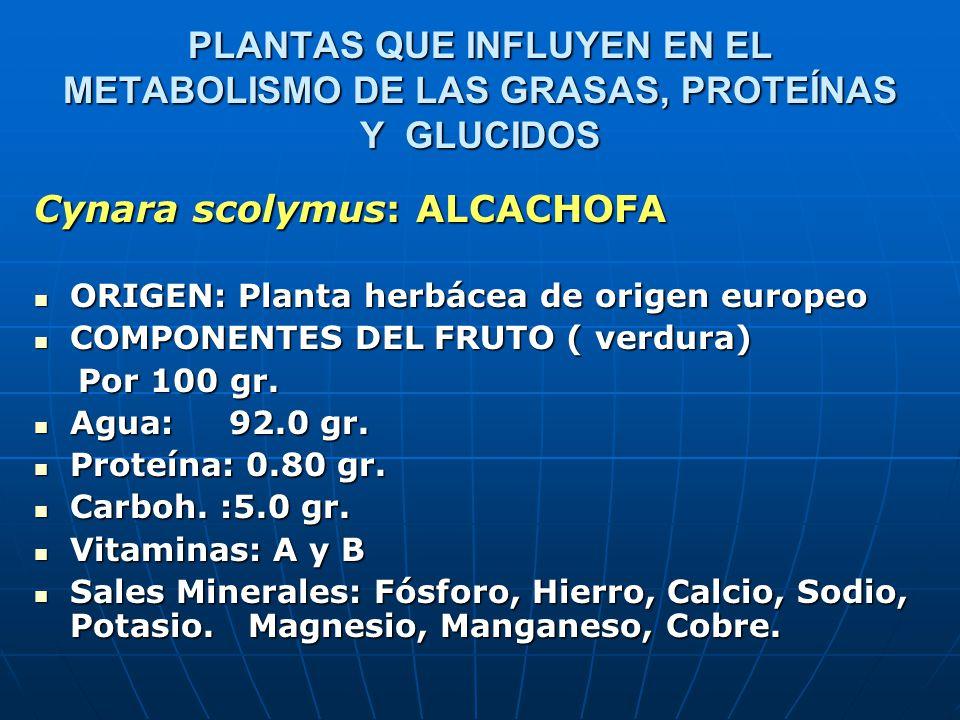 PLANTAS QUE INFLUYEN EN EL METABOLISMO DE LAS GRASAS, PROTEÍNAS Y GLUCIDOS SUSTANCIAS ACTIVAS: Cynarina, Cynaropicrina SUSTANCIAS ACTIVAS: Cynarina, Cynaropicrina ACCIÓN MEDICINAL: Efecto colerético y colagogo.