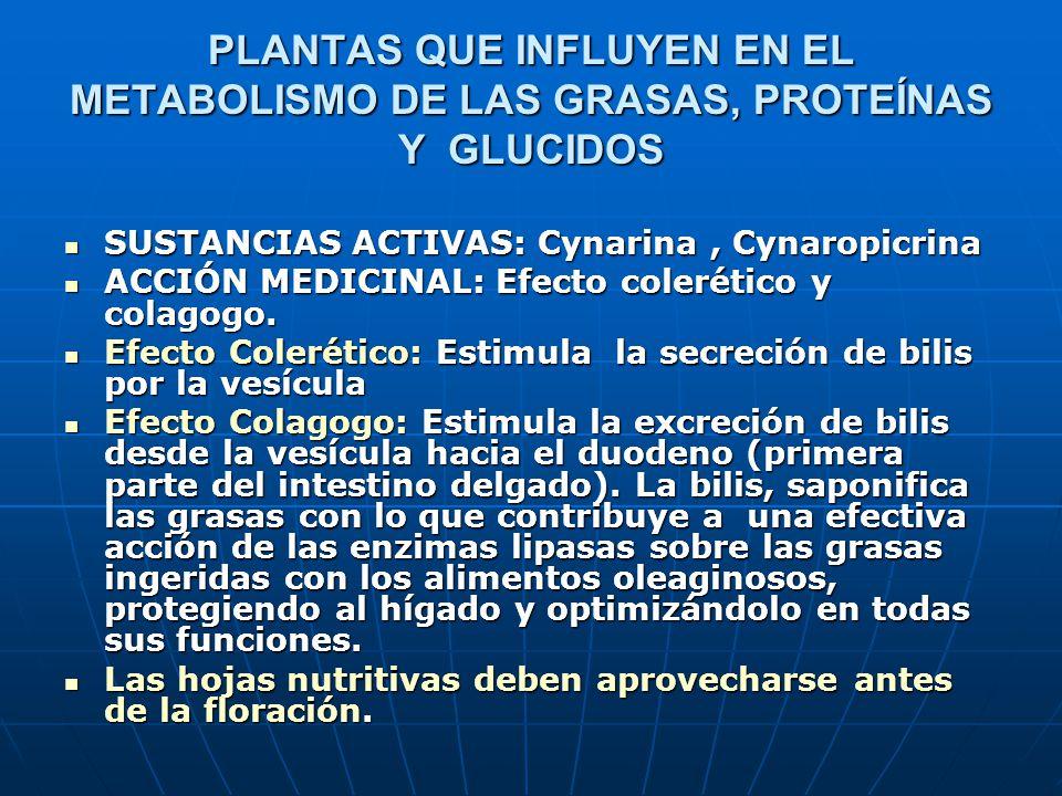 PLANTAS QUE INFLUYEN EN EL METABOLISMO DE LAS GRASAS, PROTEÍNAS Y GLUCIDOS SUSTANCIAS ACTIVAS: Cynarina, Cynaropicrina SUSTANCIAS ACTIVAS: Cynarina, C