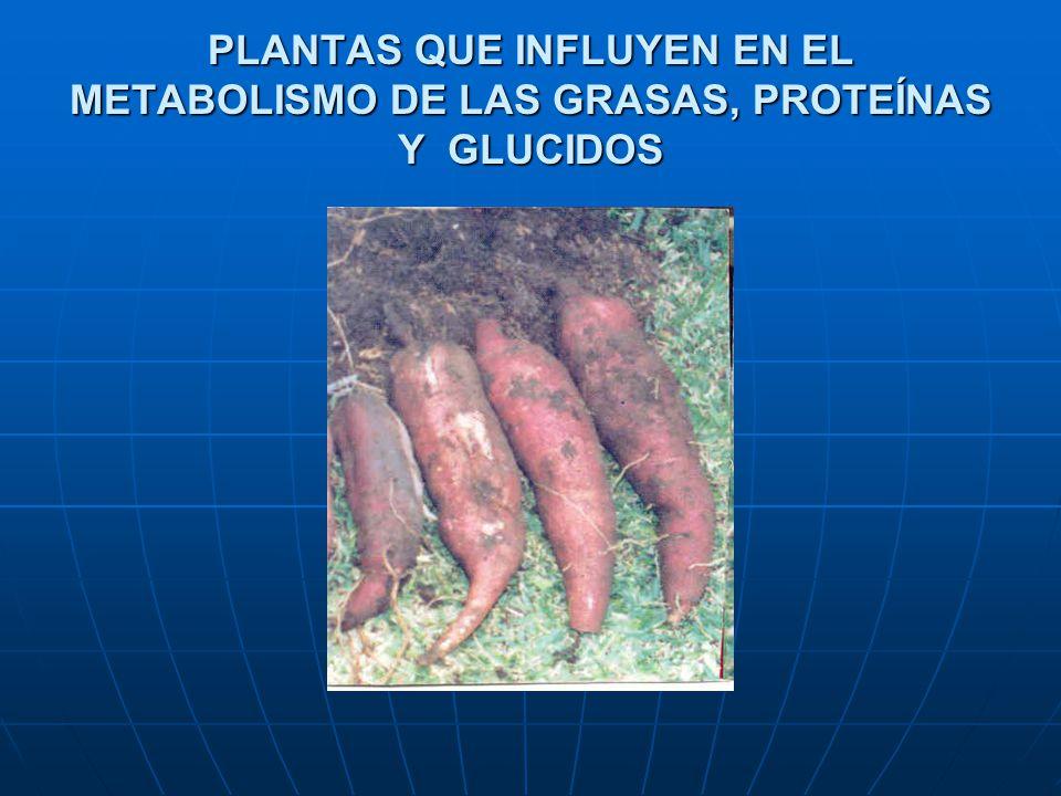 PLANTAS QUE INFLUYEN EN EL METABOLISMO DE LAS GRASAS, PROTEÍNAS Y GLUCIDOS