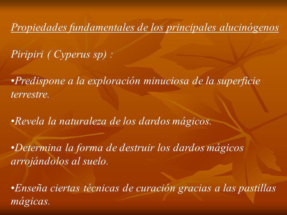 Propiedades fundamentales de los principales alucinógenos Piripiri ( Cyperus sp) : Predispone a la exploración minuciosa de la superficie terrestre. R