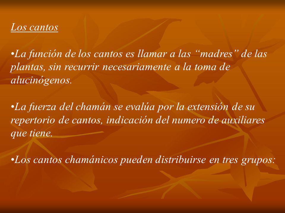 Los cantos La función de los cantos es llamar a las madres de las plantas, sin recurrir necesariamente a la toma de alucinógenos. La fuerza del chamán