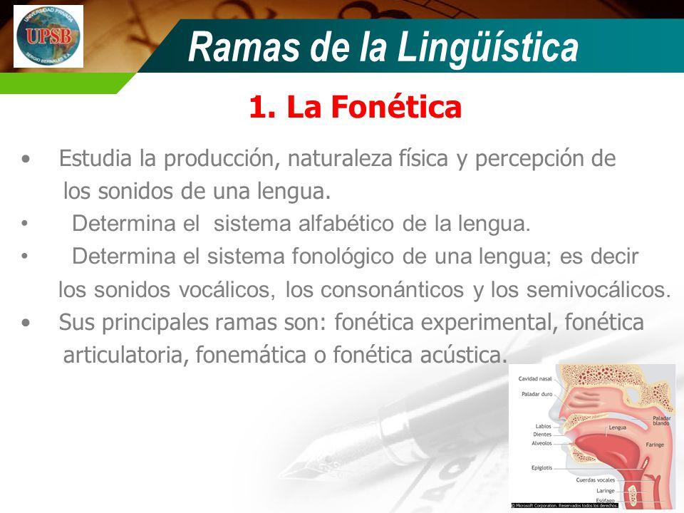 Ramas de la Lingüística 1.La Fonética Estudia la producción, naturaleza física y percepción de los sonidos de una lengua. Determina el sistema alfabét