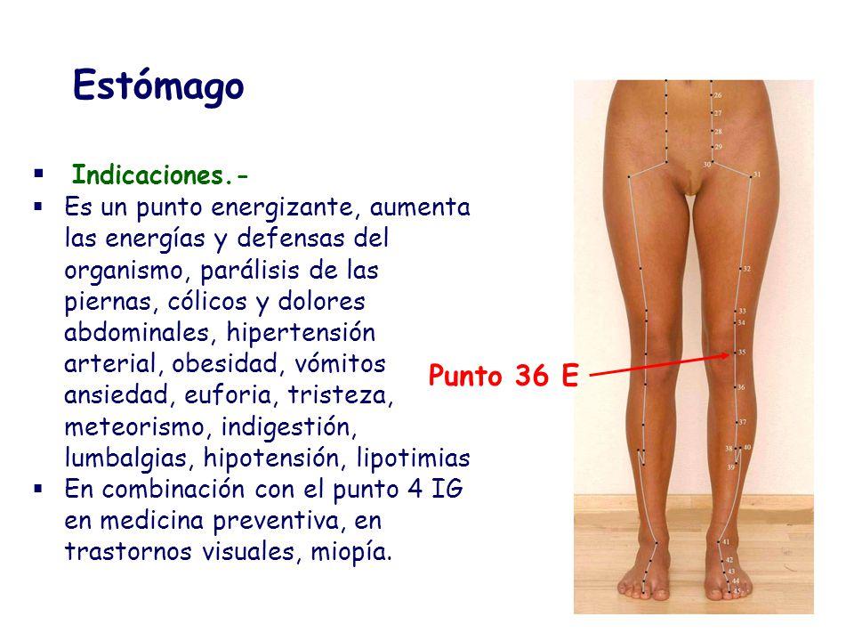 Estómago Indicaciones.- Es un punto energizante, aumenta las energías y defensas del organismo, parálisis de las piernas, cólicos y dolores abdominale