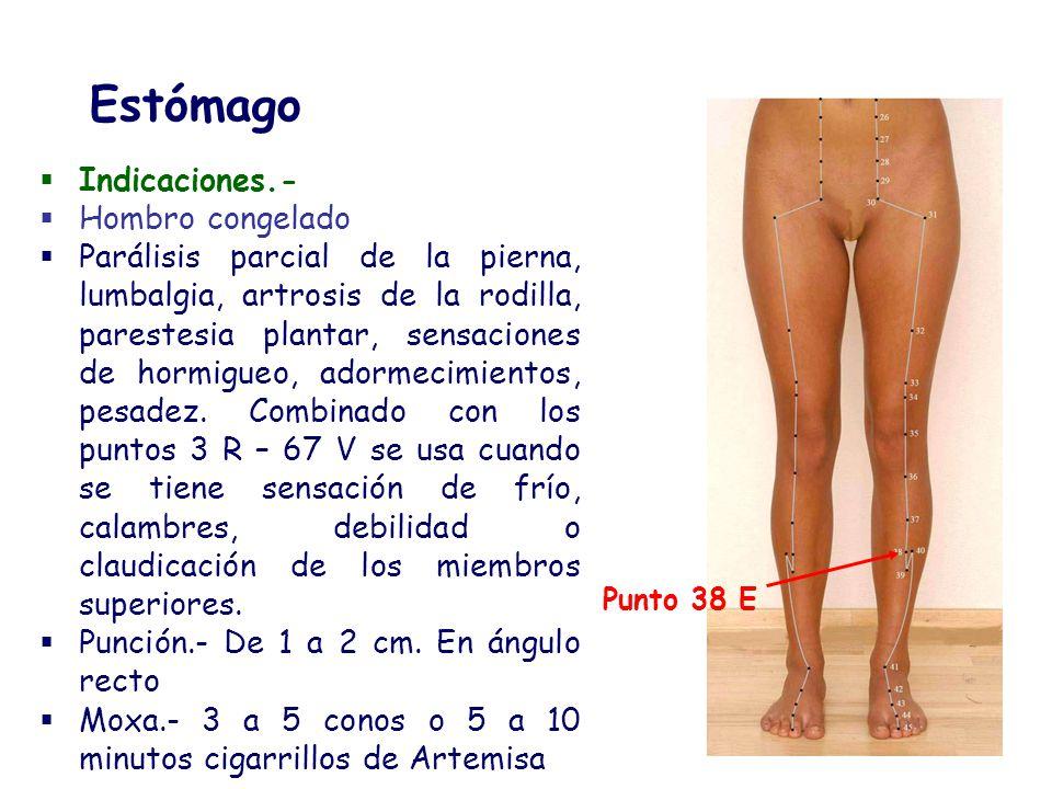 Indicaciones.- Hombro congelado Parálisis parcial de la pierna, lumbalgia, artrosis de la rodilla, parestesia plantar, sensaciones de hormigueo, adorm