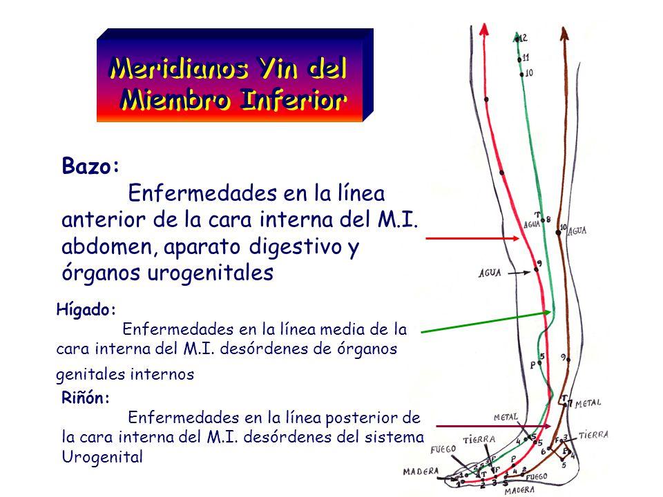 Meridianos Yin del Miembro Inferior Meridianos Yin del Miembro Inferior Bazo: Enfermedades en la línea anterior de la cara interna del M.I. abdomen, a