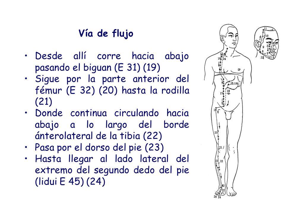 Meridianos Yang del Miembro Inferior Meridianos Yang del Miembro Inferior Estómago: Enfermedades en la cara anterior del M.I.