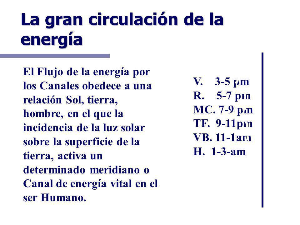 La gran circulación de la energía P. 3-5am IG. 5-7am E.7-9am B.9-11am C. 11-13pm ID13-15pm V. 3-5 pm R. 5-7 pm MC. 7-9 pm TF. 9-11pm VB. 11-1am H. 1-3