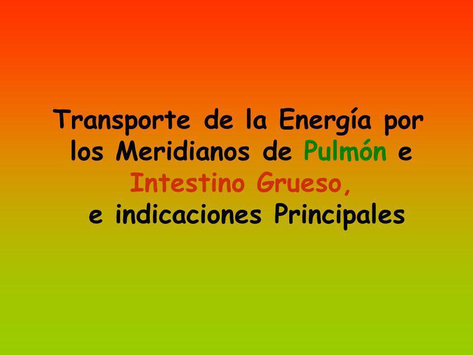 Transporte de la Energía por los Meridianos de Pulmón e Intestino Grueso, e indicaciones Principales